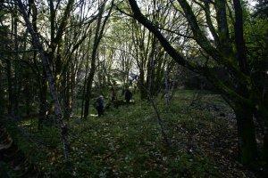 Rømteland ødegård 2008. Kun hustufter igjen, området er grodd svært til, og store trær dominerer landskapet.